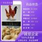 大量供应安徽阜阳良凤花鸡苗一万只成本鸡苗养殖